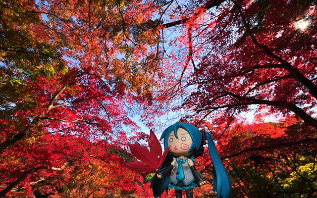 紅葉と初音ミクのねんどろいどの美しいボカロ写真壁紙画像